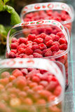 Fresh raw hand picked raspberries in plastic boxes Stock Image