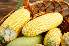 Fresh raw heads of corn in a basket Royalty Free Stock Photo