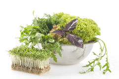 Fresh raw herbs. In a metal bowl over white background Royalty Free Stock Images