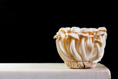 Fresh raw honey agaric on the white table royalty free stock photo