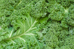 Fresh raw kale. Detail of fresh raw kale Royalty Free Stock Images