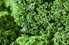 Fresh raw kale. Detail of fresh raw kale Stock Photos