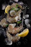 Fresh raw king prawns with lemon and lemon balm on dark slate kitchen plate. With napkin can be used as background Royalty Free Stock Image