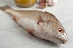 Fresh raw koebi fish Stock Photos
