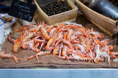 Fresh Raw Langoustine Lobsters Royalty Free Stock Photography