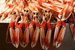 Fresh Raw Langoustines Royalty Free Stock Photos