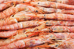 Fresh raw  langoustines. Fresh raw frozen langoustines as a background Stock Photo