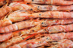 Fresh raw  langoustines. Fresh raw frozen langoustines as a background Stock Images