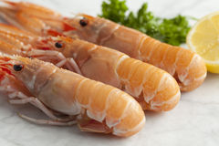 Fresh raw langoustines Stock Photos