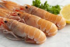 Fresh raw langoustines stock photos