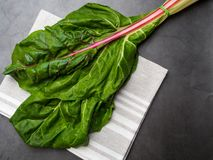 Fresh raw leaves of chard, mangold, swiss chard on a kitchen towel. Cellulose and lilac acid food stock image