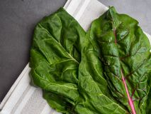 Fresh raw leaves of chard, mangold, swiss chard on a kitchen towel. Cellulose and lilac acid food royalty free stock photography