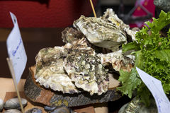 Fresh, raw, live, oysters on the half shell. Fresh, raw, live, oysters mussels on the half shell ,green salad, seafood Royalty Free Stock Photography