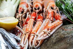 Fresh and raw lobster. Turbot, anchovies, lemon and vegetables Royalty Free Stock Image