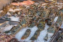 Fresh raw lobster shrimp at Thai seafood market. Fresh raw sea lobster shrimp premium grade display for sale at Thai street food market or restaurant in Bangkok Stock Photos