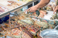 Fresh raw lobsters seafood at a food market. Stall Stock Photography
