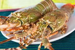 Fresh raw lobsters on the table. In a plate Royalty Free Stock Photography