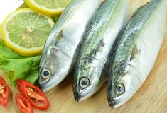 Fresh raw mackerel Royalty Free Stock Image