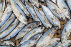 Fresh raw mackerel fish. On bamboo Threshing basket Stock Photo