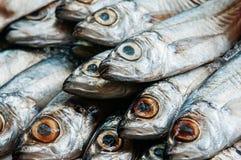 Fresh raw mackerel fish close up eyes and shiny skin details stock image