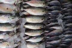 Fresh raw Mackerel fish i. N the market Stock Photo
