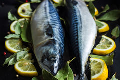 Fresh raw mackerel fish  with lemon and bay leaves. On a black background Stock Photos