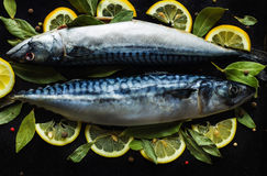 Fresh raw mackerel fish  with lemon and bay leaves. On a black background Stock Photography