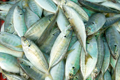 Fresh raw mackerel fish. In market Royalty Free Stock Images