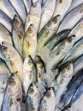 Fresh raw mackerel fish. In market Stock Images