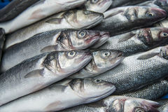 Fresh raw Mackerel fish. In the market Stock Images