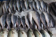 Fresh raw Mackerel fish. In the market Royalty Free Stock Image