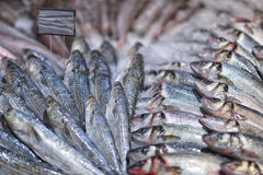 Fresh raw Mackerel fish in the market.  Royalty Free Stock Photography