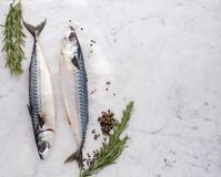 Fresh raw mackerel fish on the table with fresh herbs and spices. Top view Stock Image