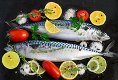 Fresh raw mackerel with vegetables on a black metal background.  Royalty Free Stock Photo