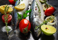 Fresh raw mackerel with vegetables on a black metal background.  Royalty Free Stock Images