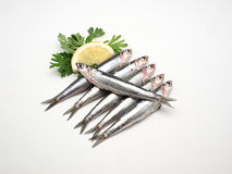 Fresh and raw mediterranean anchovy on white background.  Stock Images