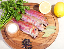 Fresh raw Mediterranean red mullet. Fish on a cutting board with herbs and lemon Stock Photography