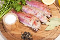 Fresh raw Mediterranean red mullet fish. On a cutting board with herbs and lemon Royalty Free Stock Photography