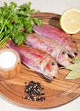 Fresh raw Mediterranean red mullet fish Royalty Free Stock Photography