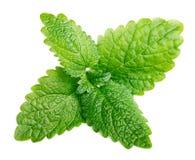 Fresh raw mint or green lemon balm leaves (Melissa officinalis) on white Royalty Free Stock Photos