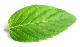Fresh raw mint leaf on white. Fresh raw mint leaf isolated on white background Stock Photography