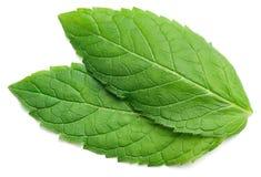 Fresh raw mint leaf on white royalty free stock photos