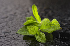 Fresh raw mint leaves. On black background Stock Image