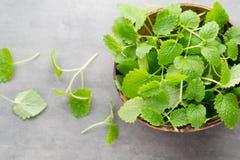 Fresh raw mint leaves on gray background. Fresh raw mint leaves on gray background Royalty Free Stock Image
