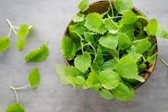 Fresh raw mint leaves on gray background. Fresh raw mint leaves on gray background Royalty Free Stock Photos