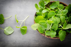 Fresh raw mint leaves on gray background.  Stock Photos