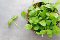 Fresh raw mint leaves on gray background. Fresh raw mint leaves on gray background Stock Images