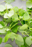 Fresh raw mint leaves on gray background. Fresh raw mint leaves on gray background Stock Photos