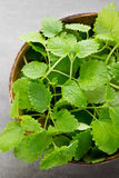 Fresh raw mint leaves on gray background. Fresh raw mint leaves on gray background Royalty Free Stock Photography