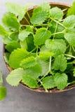 Fresh raw mint leaves on gray background. Fresh raw mint leaves on gray background Stock Photo
